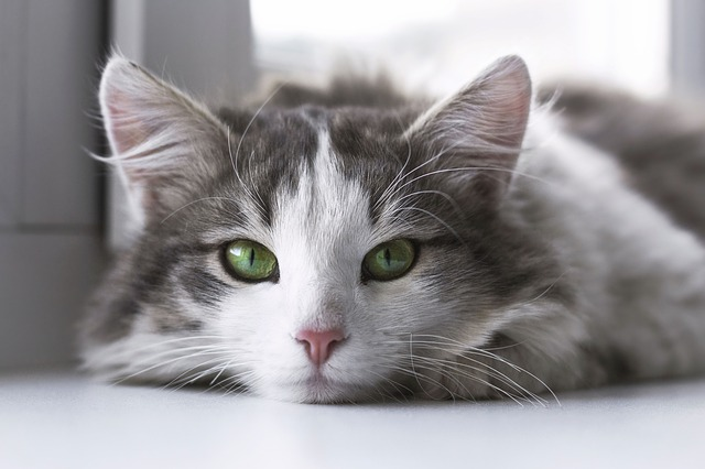 strakatá kočička